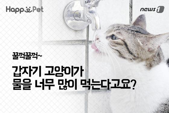 '食べすぎ'は韓国語で何?너무 먹었어요, 너무 많이 먹었어요